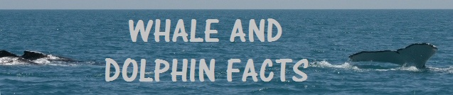 whale and dolphin facts