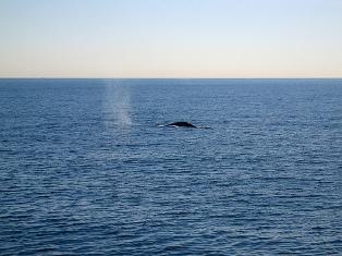 whale watching long beach