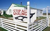Arguments Against Whaling